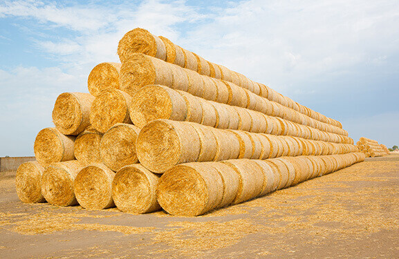 A row of stacked hay bales.