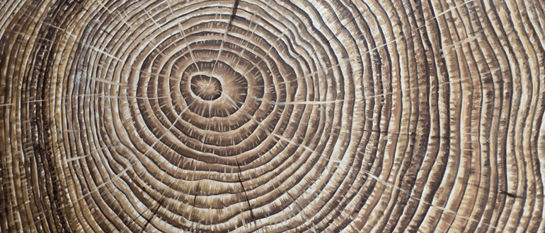 Growth rings in a tree, close-up