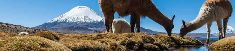 A Chilean mountain landscape with two llamas in the foreground