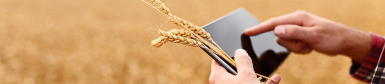 A man's hands navigate on a Tablet which he is holding along with four ears of corn. In the background, a field can be seen.