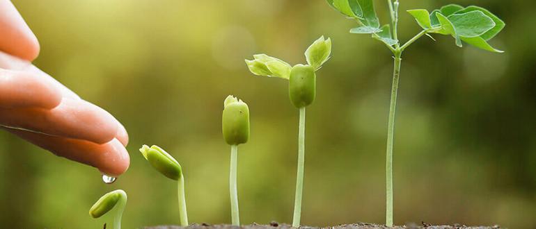 From left to right, a close-up of a series of seedlings, each one taller than the other. On the left is a hand, from which a droplet of water drips down onto the smallest seedling